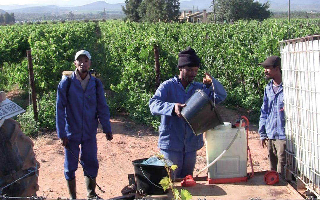 Documentary film reveals slave-like conditions behind South African wine labels, but is it doing the cause a disservice?